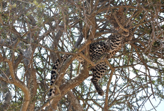 Tanzania - safari (25)