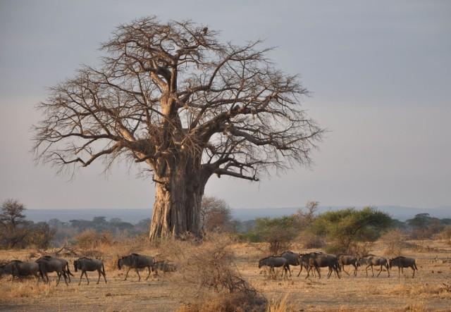 Tanzania - safari (27)